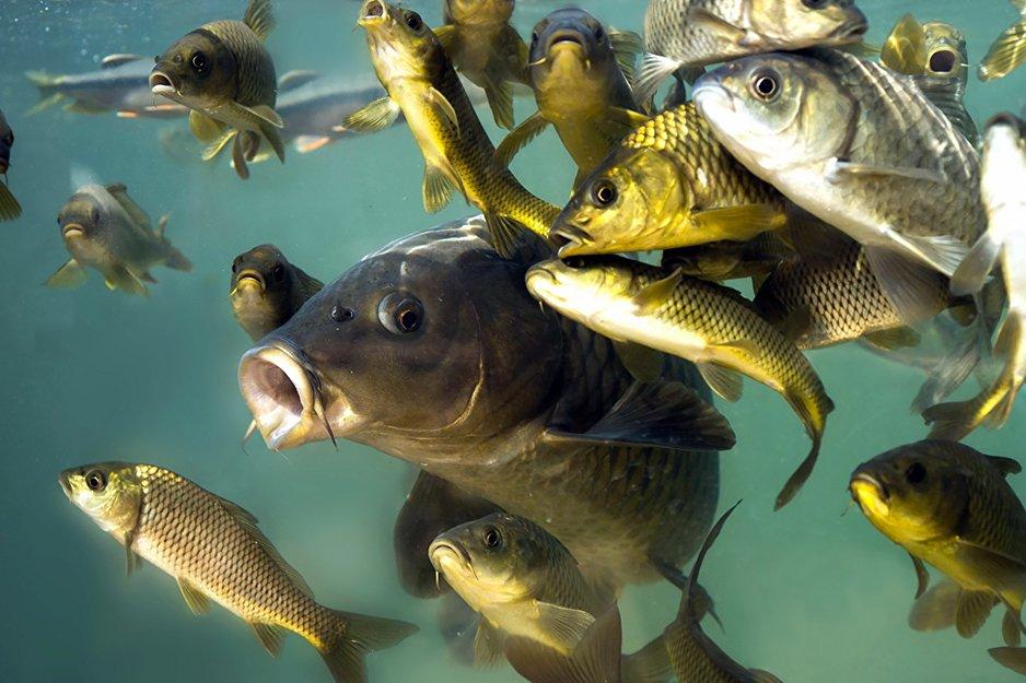 Ryby rzeczne