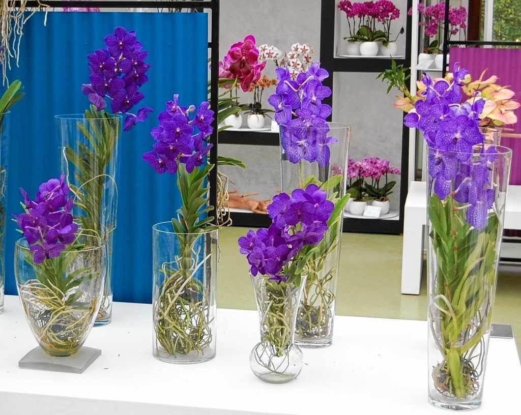 Rodzaje storczyków i pielęgnacja ich w domu w trakcie i po kwitnieniu