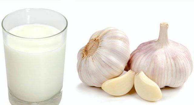 Mleko czosnkowe: właściwości lecznicze, jak gotować, korzyści
