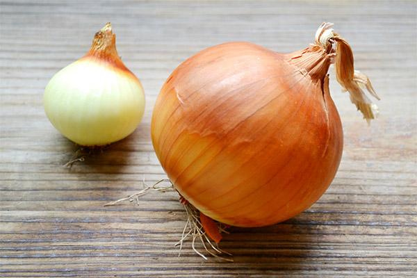 Ciekawe fakty na temat cebuli